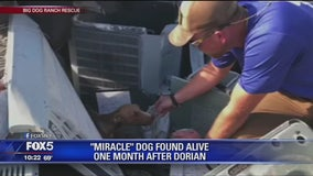"""Miracle"" dog found alive one month after Hurricane Dorian"