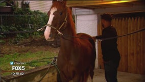 Staten Island couple keeps pet horse