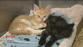 NJ animal hospital has neonatal unit for kittens