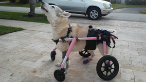 Disabled dog missing after car stolen with pet inside in South Florida