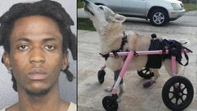 Police arrest Florida man in death of disabled dog