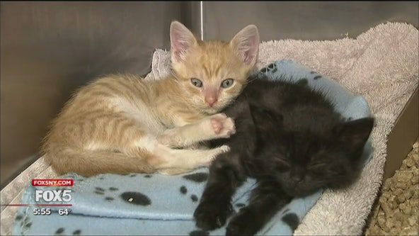 NJ animal hospital has neonatal unit for kittens
