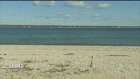 Die-off of Peconic Bay scallops under review