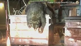 California deputies help rescue bear named 'T-Shirt' who became stuck inside a dumpster