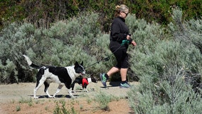 Dog owners have lower risk of repeat event after heart attack or stroke, study finds