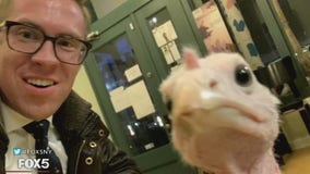 A lucky turkey is saved from a Brooklyn slaughterhouse