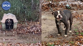 Long Island officers rescue dogs left outside in the cold