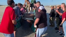 Navy personnel rescue manatee stranded on Florida beach