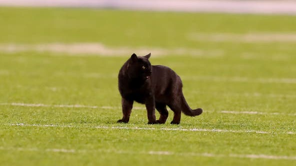 Monday night black cat still on the loose at MetLife Stadium