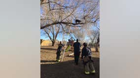 Firefighters rescue dog from tree in Colorado