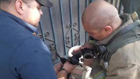 Firefighters revive tiny dog with oxygen mask after house fire