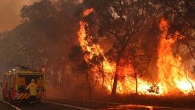 Thousands of koalas feared dead in wildfire-ravaged Australia