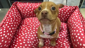 Puppy thrown from moving SUV on Long Island