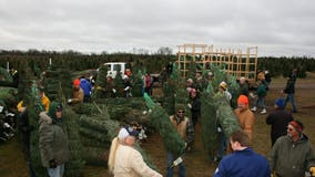 Farm donates more than 400 Christmas trees to military families