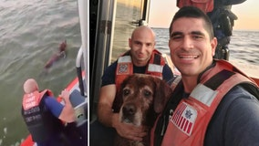 Coast Guard rescues dog found swimming off Florida coast