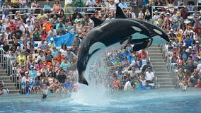SeaWorld Orlando ends 'One Ocean' killer-whale show, will add 'Orca Encounter'
