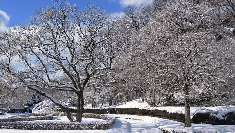 Snow-covered trees and paths at the Brooklyn Botanic Garden