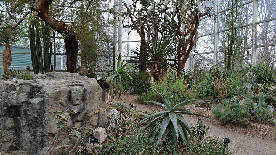 A look inside the Brooklyn Botanic Garden