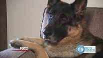 AKC and FOX 5 present Meet the Breeds
