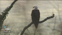 Bald eagle sighting brings bird lovers to Riverside Park