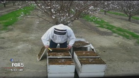 How the popularity of almonds is affecting bees nationwide