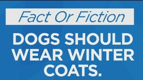 Fact Or Fiction: Dogs should wear winter coats