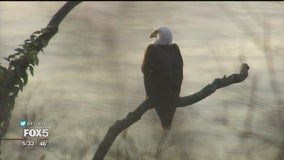 Bald eagle sighting in Riverside Park delights bird watchers