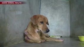Drug-free device helps dogs with separation anxiety