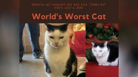 NC animal rescue posts brutally honest cat adoption ad: 'She's just a jerk'