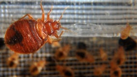 Police investigate after bed bugs released in Pennsylvania Walmart