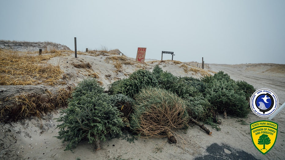 Christmas trees on the sand dunes