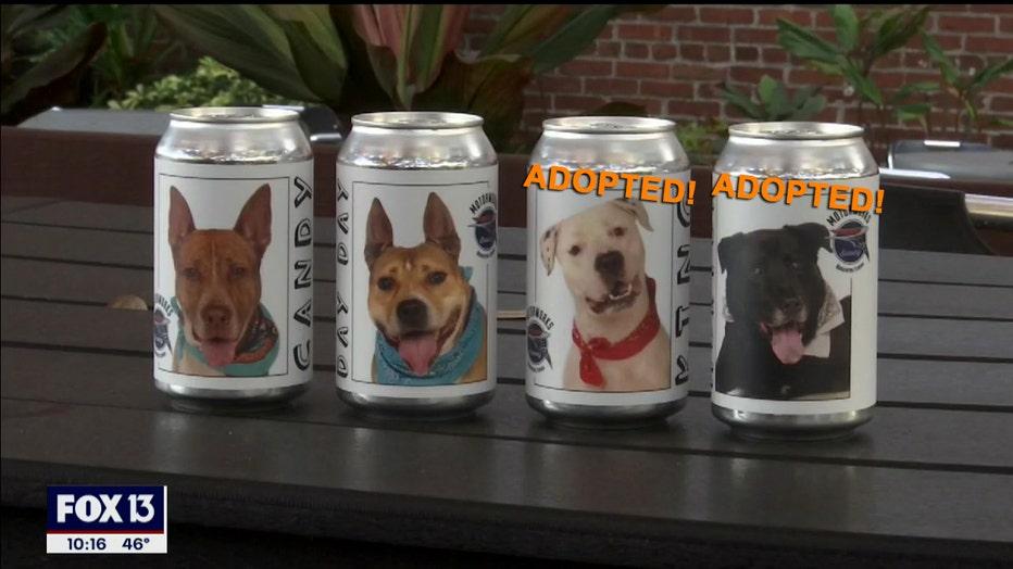 motorworks-adoptable-dogs-8.jpg