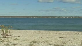 Parasite may have killed Peconic Bay scallops, lab says
