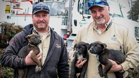 Georgia Power linemen rescue puppies 'thrown out like trash' inside dumpster