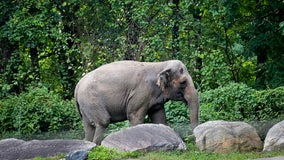 Bronx Zoo elephant isn't 'imprisoned,' judge rules