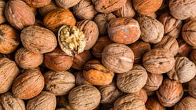 Study: Eating walnuts can slow cognitive decline