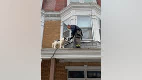 Firefighters rescue husky from roof in Pennsylvania
