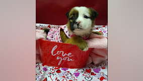 """Tennessee animal shelter selling """"Puppergrams"""" for Valentine's Day"""