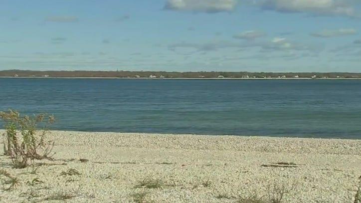 Peconic Bay Scallop Die Off Fox 5 New York