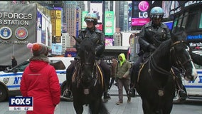 How the NYPD is using wild mustangs to supplement its mounted units