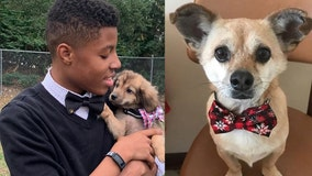 13-year-old boy makes bow ties for shelter animals to help them get adopted
