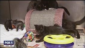 Pets and COVID-19 precautions