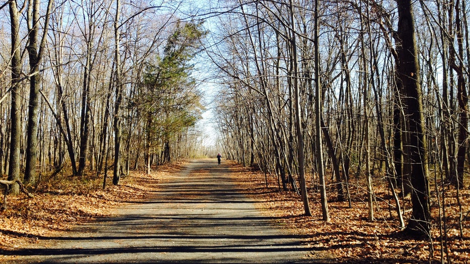 A wide gravel trail lined with trees