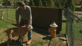 Food bank helps feed hungry pets during pandemic