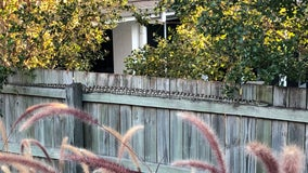 'Look who's come to visit today': Australian woman finds massive python on fence