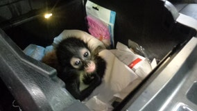 Endangered monkey found hidden in truck at U.S.-Mexico border