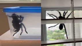 Massive spider found clinging to Texas home: 'I was terrified!'
