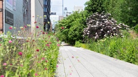 The High Line to reopen with limited capacity on July 16