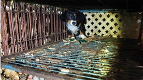 61 dogs rescued from NJ house of horrors
