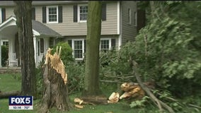 Fast-moving storm tears down trees in New Jersey